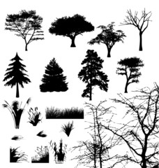 Real tree and grass silhouetts .