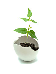 A plant hatching from egg