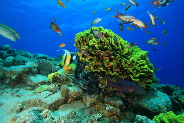 Cabbage Coral and Fish