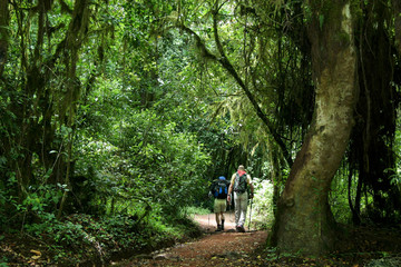randonnée en forêt vierge