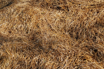 Heap of silage of hay straw for stock feed