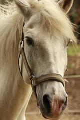 Cheval Equitation Horse