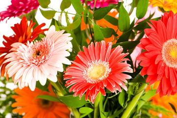 Red gerbera flower agaisnt green blurred background