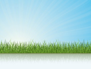 Green Grass Under The Sunlight. Nature Vector Collection.