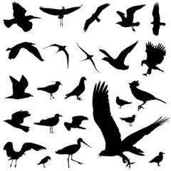 set of bird vector