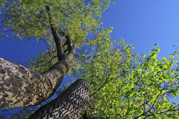 Tuinposter Aan het plafond Sommer im Baum