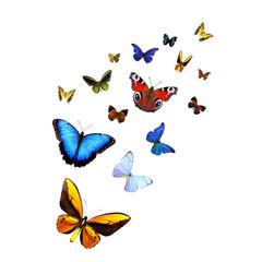 Ein Dutzend Schmetterlinge