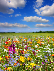 Fototapeta Fleurs de printemps obraz