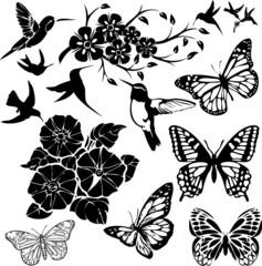 Birds, Butterflies and Flower collage (vector)