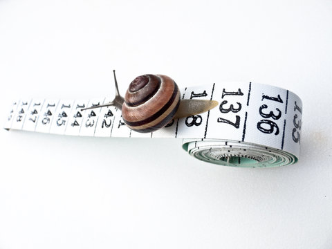 Snail Travelling down Tape Measure