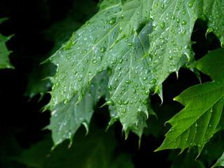 Blatt und Regen