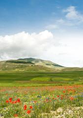 paesaggio umbro in fiore