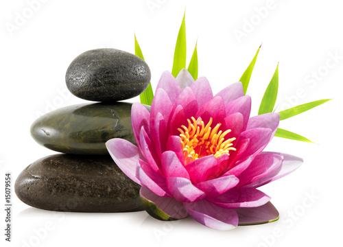 Composition Zen Pierres Lotus Et Bambou