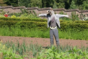 scarecrow in kitchen garden/ vegetable garden. onions