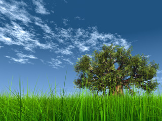 3d green grass, a blue sky with a natural old baobab tree