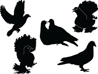 pigeon collection - vector