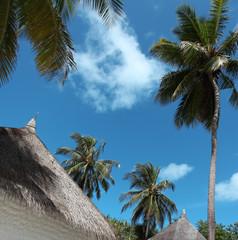 Living in paradise - Leben im Paradies