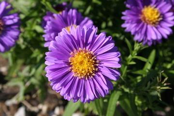 Blüten50