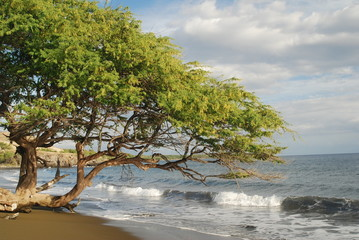 Tree on Beach