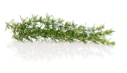 Fresh Sprigs Of Rosemary Herbs For Cooking