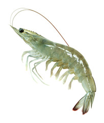 single raw vanna-mei prawn isolated on white background