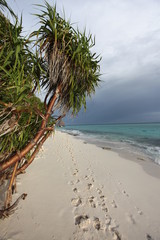 Strand - Malediven - Beach - Maldives