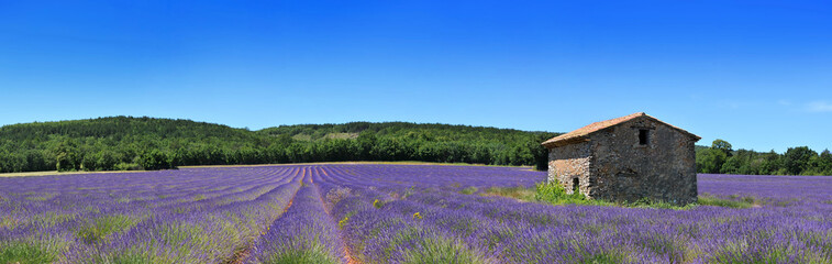 Canvas Prints Lavender Panorama de provence