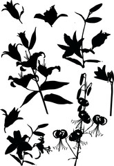 lily flower silhouettes