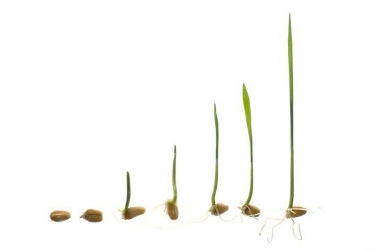 Seedling development