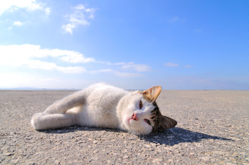 Cat on deserted quay