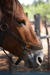The profile view of a horse