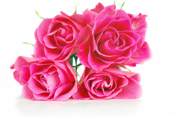 Pink bright roses.