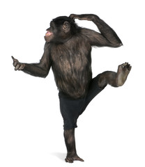 Foto op Aluminium Aap monkey dancing on one foot