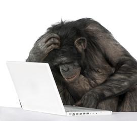 Fotorolgordijn Aap Chimpanzee playing with a laptop