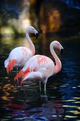 Twee Flamingo& 39 s