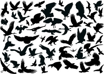 fifty four bird silhouettes