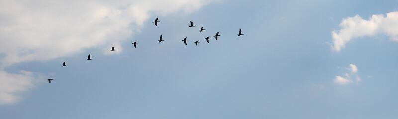 Birds are in sky