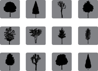 The set from silhouettes of trees