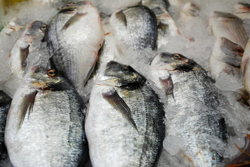 fresh cooled fishes on a market stall