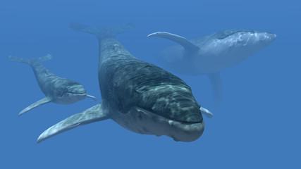 Drei Wale
