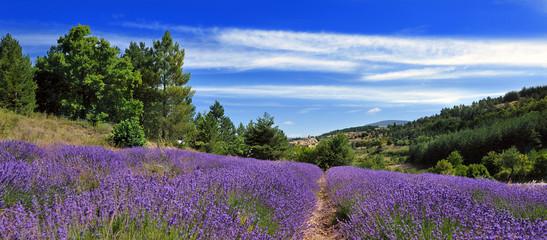 Printed roller blinds Lavender colline et lavande
