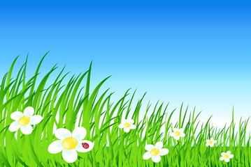 vector cartoon landscape with grass flowes and sky