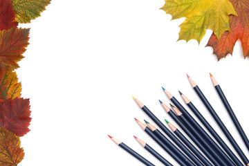 Pencils and autumn leaves