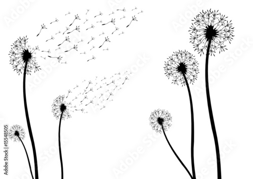 """""""silhouette von einer pusteblume"""" stock image and royalty"""
