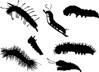 caterpillar silhouettes collection