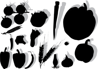 vegetables silhouettes with shadows
