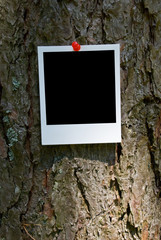 Vintage photo frame attach to bark background clipping path