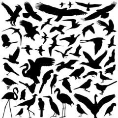 bird vector 2
