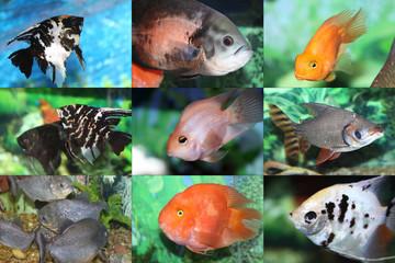 Aquarian small fishes