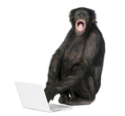 Fotorolgordijn Aap Monkey playing with a laptop